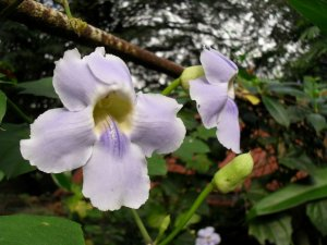 1043_garden-2011SDC10924