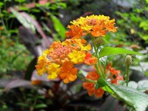 1043_garden-2011SDC10926
